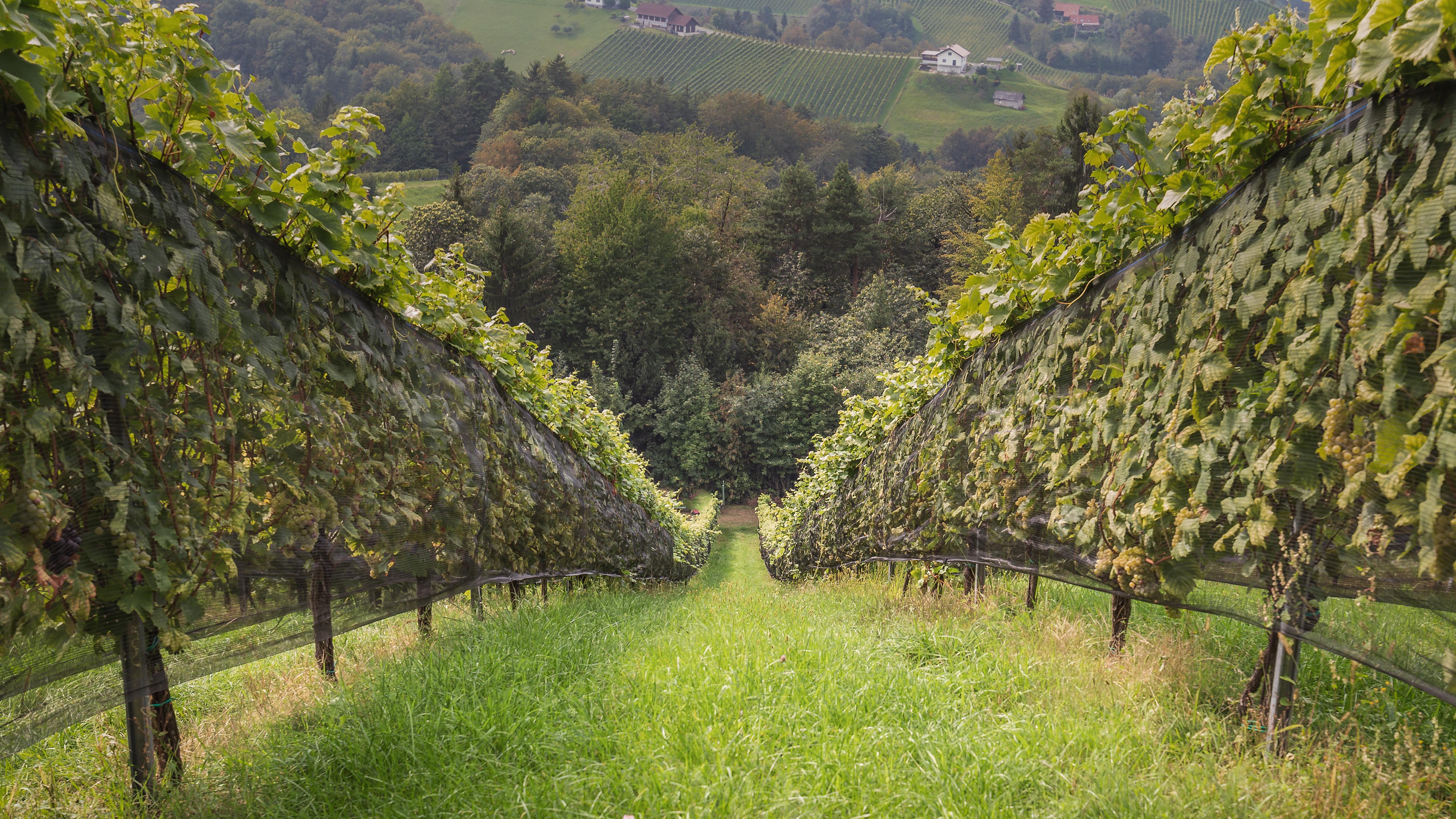 10 Things to do in Styria auf dem österreichischen Lifestyle Blog Bits and Bobs by Eva. Mehr über die Steiermark auf www.bitsandbobsbyeva.com